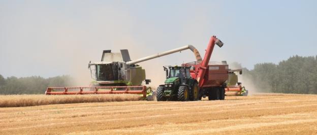 Новый сорт озимой пшеницы «Липецкая звезда»